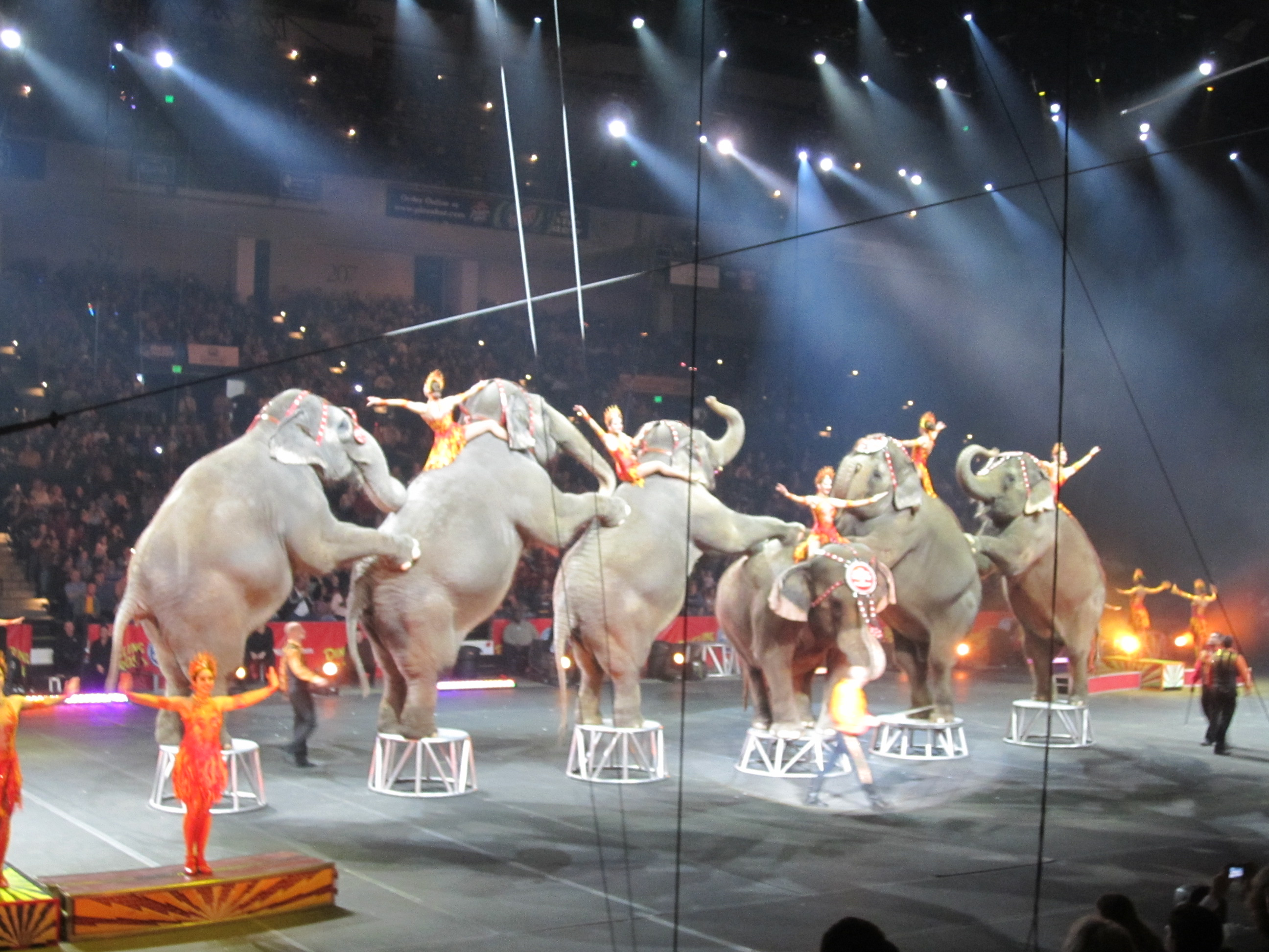 a visit to a circus We believe it shows what made ringling bros and barnum & bailey truly the greatest show on earth ® sincerely, explore visit the ringling bros youtube page for.